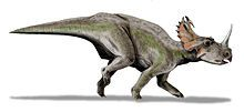 Centrosaurus (/ˌsɛntrɵˈsɔrəs/ sen-tro-sawr-əs) is a genus of herbivorous ceratopsian dinosaurs from the late Cretaceous of Canada. Their remains have been found in the Dinosaur Park Formation, dating from 76.5 to 75.5 million years ago.