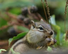 having+a+bite:)+by+Lilly+Pilly+on+500px