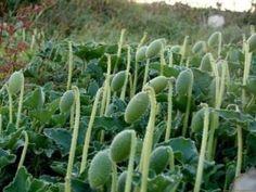 Hangi Hastalıklarda ve Nasıl Kullanılır? What are the Benefits of Bitter Melon? Garden Types, Diy Garden, Garden Care, Garden Paths, Garden Landscaping, Garden Ideas, Cactus House Plants, Cactus Pot, Cactus Flower