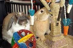 Make Homemade Rabbit Toys - wikiHow