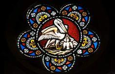 Resultado de imagen para Pie pelicane