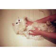 †††† ❤ liked on Polyvore featuring animals, pictures, photos, backgrounds and cats
