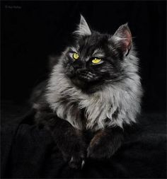 Photo?  Vintage?  I am not a huge fan of black cats, but this one is pretty.