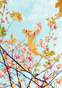 Autumn mornings: sunshine and crisp air, birds and calmness, year's end and day's beginnings. ~ Terri Guillemets