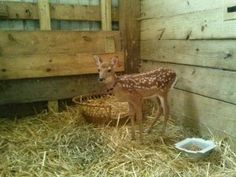 """Agents Raid Animal Shelter, Kill Deer Named """"Giggles""""  This is ridiculous...Wisconsin DNR should be ashamed!!"""