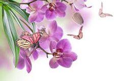 Risultati immagini per butterfly and flowers