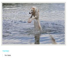 I CAN'T BREATHE 37 Times Tumblr Told The Truth About Dogs