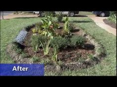 Sometimes runoff water from impervious surfaces will concentrate and cause erosion problems. Rain gardens harvest this water, filter pollutants, and prevent erosion. Runoff Water, Water Pollution, Yard Drainage, Insect Hotel, Square Foot Gardening, Rain Garden, Farm Gardens, Backyard Landscaping, Youtube