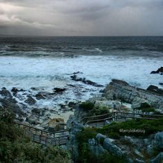 BettyBakeBlog's photo from Hermanus cliff path.