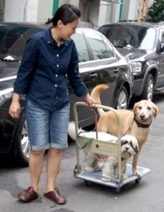 """Chinlun Lee's dog Tony going for a """"drive"""""""