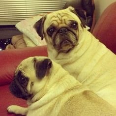 Isn't it time for you to get up and feed us?! (SR)