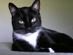 Cat portrait..... - Pixdaus