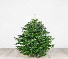 Weihnachtsbaum – Der smarte Sven – ca. 130 cm