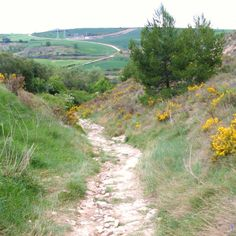 I will walk the Camino de Santiago!