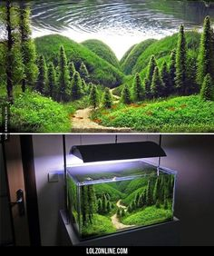 Wow, It's Just An Aquarium #lol #haha #funny