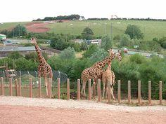 Zoo Où Près de 500 animaux sont morts doit être arrêté