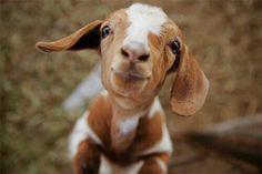 Hi, sweet face :-)