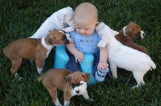 Boxer babies and a baby!!! :)
