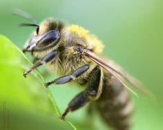Macro: Bee