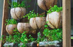 Aproveitando casca de coco e garrafas pet e ainda decora o jardim.