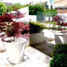 Chic contemporary town garden