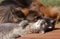 Dog & Cat Relaxing in the Sun