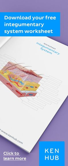 Struggling to learn the of the and Start improving your knowledge right away with our handy worksheets. Skin Anatomy, Human Body Anatomy, How To Study Anatomy, Medical Mnemonics, Anatomy And Physiology, Study Tips, How To Introduce Yourself, Worksheets, How To Memorize Things