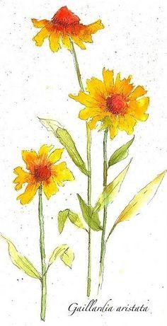 watercolor flowers by tamala