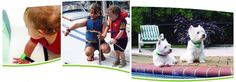 Safety Turtle Water and Pool Alarm: Can be used for children & Pets ! Base can also use batteries so you can take it with you to lakes and on boats ! Our Bulldogs wear them ...