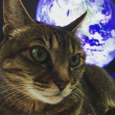 さらば地球よ #猫 #cat