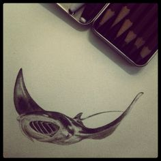 4th in my series of manta ray pencil sketches.  Planning to turn them into some ocean / animal / nature themed tattoo flash.  Really enjoyed the detail, it's how I used to draw when I was young and thought I had to evolve to be simpler.  Now I'm being encouraged to return to it!  #artistproblems  art / artist / drawing / sketch / sea / marine