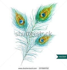 watercolor, feathers, peacock,