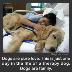Dogs frankly are more than just family. They are the glue in so many cases.