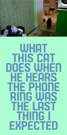 What This Cat Does When he Hears The Phone Ring Was The Last Thing I Expected!