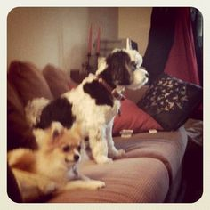 best friends, Foxy & Barrington