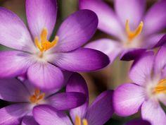 La vita a colori: Viola