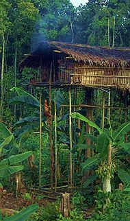 The Korowai live together in small family groups in treehouses. African Tree, Cool Tree Houses, South Pacific, Small World, Around The Worlds, Wooden Houses, The Incredibles, Treehouses, Live