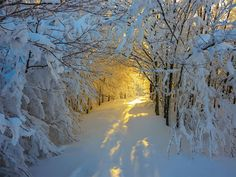 Winter Sunrise On Path In Campigna National Park , Italy