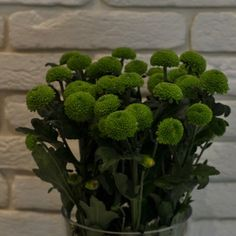 Crizanteme Verzi Herbs, Plants, Flowers, Herb, Planters, Plant, Spice, Planting