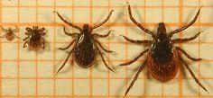 Preventie voor Lyme, wat kan je doen?