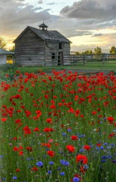 Beautiful Classic And Rustic Old Barns Inspirations No 23 (Beautiful Classic And Rustic Old Barns Inspirations No design ideas and photos Country Barns, Country Life, Country Living, Country Charm, Country Roads, Barn Pictures, Country Scenes, Red Barns, Old Farm