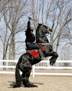 Friesian horse - Zorro?
