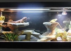Bearded Dragon Enclosure, Bearded Dragon Cage, Terrarium, Reptiles, Dragons, Aquarium, Terrariums, Goldfish Bowl, Aquarium Fish Tank