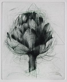 Artichoke Etching and drypoint Jake Muirhead Gravure Illustration, Illustration Art, Illustrations, Botanical Art, Botanical Illustration, Grabar Metal, Intaglio Printmaking, Drypoint Etching, Etching Prints