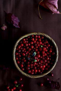 Cowberries | ingwervanille - Svetlana Karner