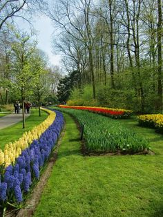 Kukenhoff Gardens just outside Amsterdam is amazing!!
