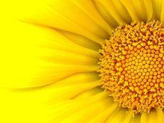 AHHH! Yellow