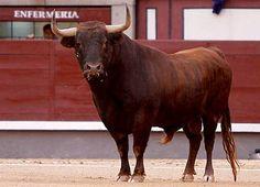 corrida de toros en espana | Cerrada la Goyesca de Madrid – 2 de Mayo 2011 | DE SOL Y SOMBRA