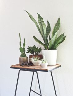 vintage plant stand and plants by Kimberly Rhodes Roberts