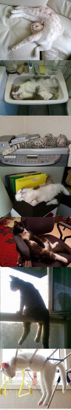 more kitties sleeping in places they shouldn't be